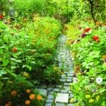 Environnement : Eau et lumière, de l'équinoxe de printemps au solstice d'été